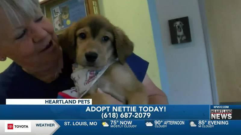 Adopt Nettie today!