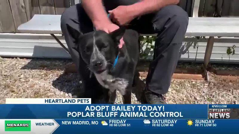 Heartland Pets feat. Bailey 4/23