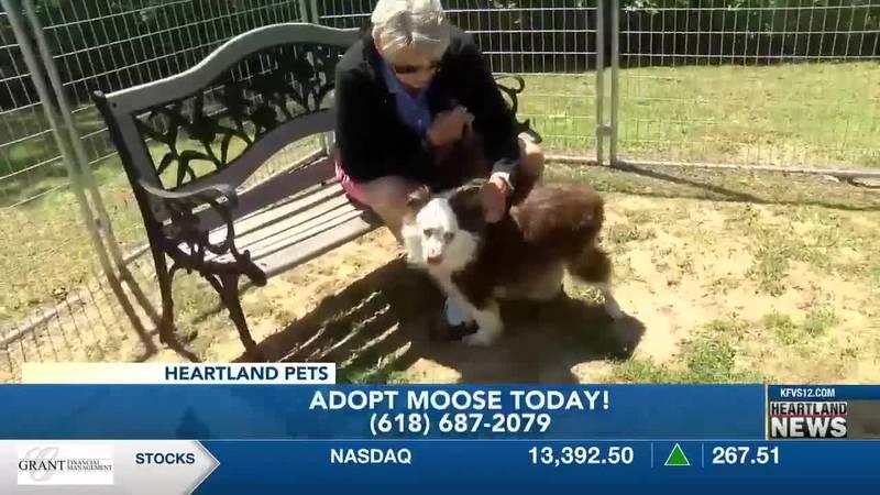 Heartland Pets feat. Moose 5/14