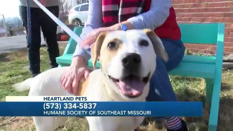 Heartland Pets feat. Humane Society of Southeast Mo. 12/18