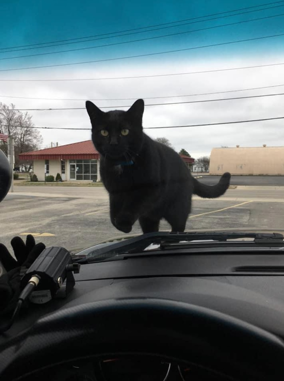 Lt. Roach, the Malden Police Department's cat, has returned home safely after going missing for...