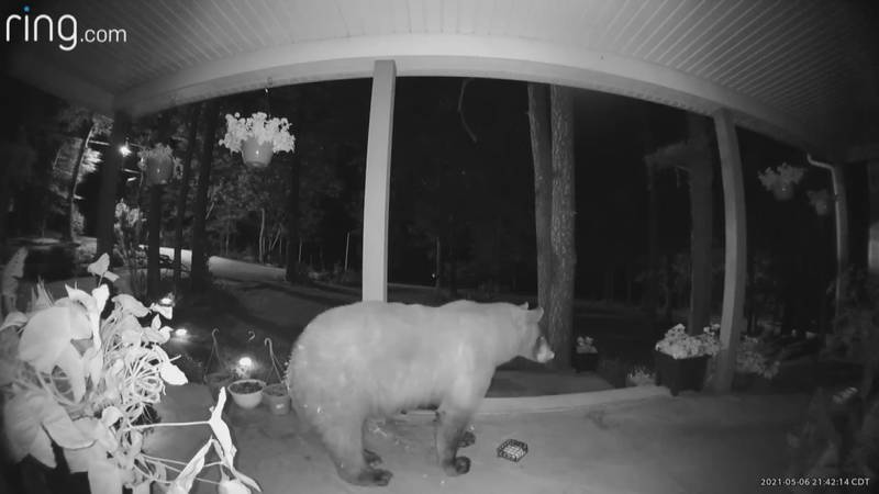 Black bear caught on camera in Ste. Genevieve, Mo.