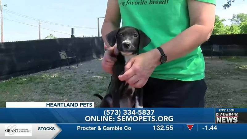 You can adopt Charlie from the Humane Society of Southeast Missouri.