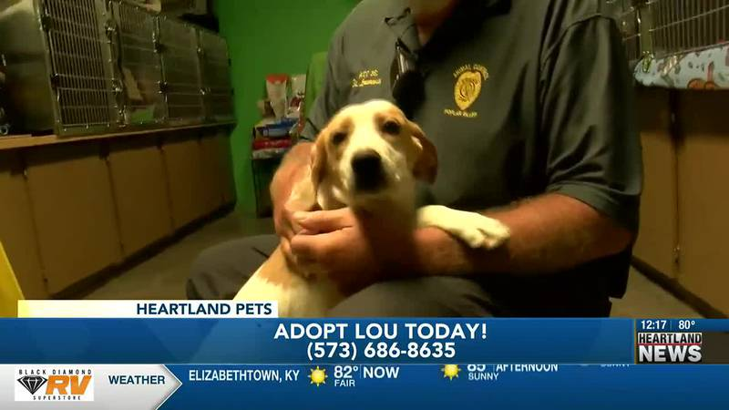 Heartland Pets featuring Lou from Poplar Bluff Animal Control.