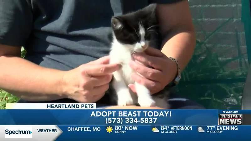 Heartland Pets:  Meet Beast   9/3