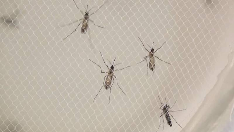 Routine mosquito testing found the first batch of mosquitoes positive for West Nile Virus in...