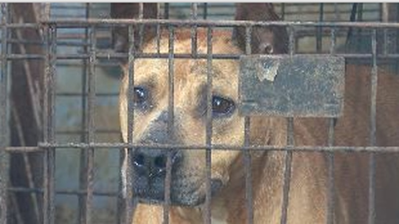A caged dog after being rescued.