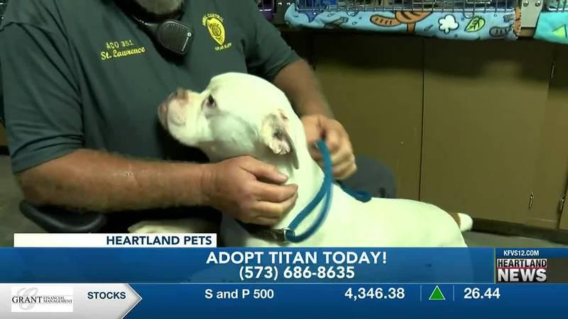 This week's Heartland Pets is Titan from Poplar Bluff Animal Control.