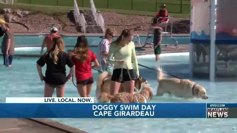Doggy Swim Day held at Cape Splash.