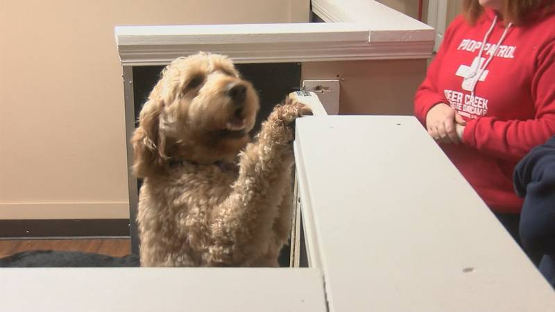 As Missouri's minimum wage increase, more than half of the staff at a doggie day care in Cape...