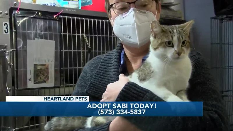 Heartland Pets:  Meet Sabi   1/8