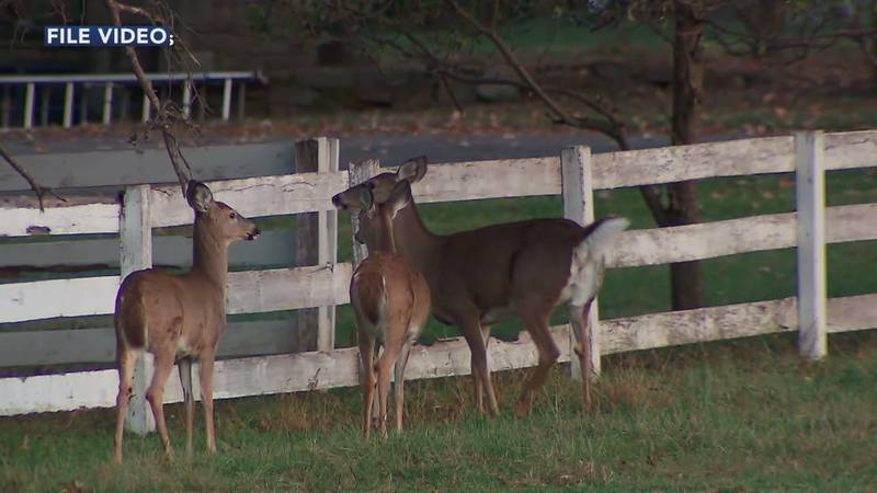 In just a couple weeks the City of Cape Girardeau will have its first urban deer hunting season.