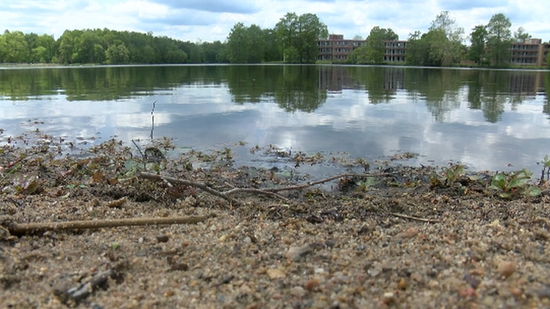 SIU researchers looking for Algae Blooms in campus lake, and how to tackle to the problem.