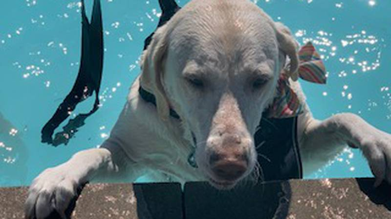 On Saturday, September 25, the Cape Girardeau Parks and Recreation Department held a Doggy Swim...
