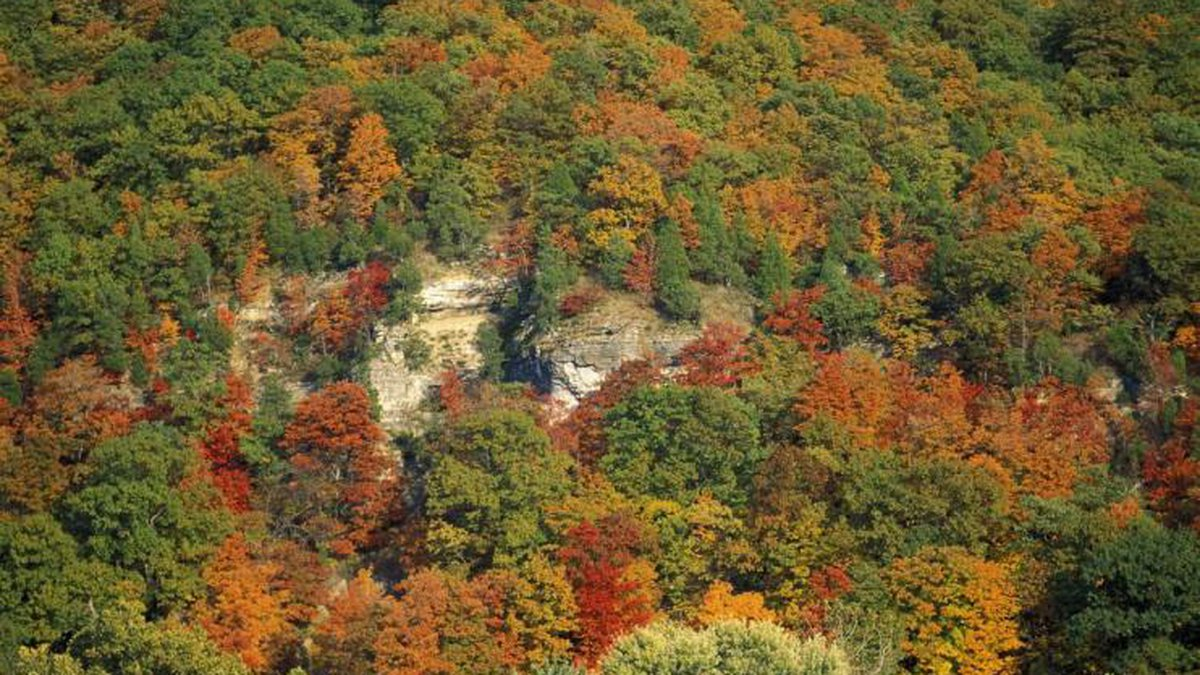 See fall color, like this photo taken in Defiance, using MDC's fall color report.