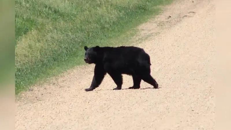 Both of his back legs were broken.