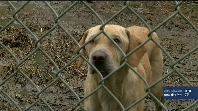 A Kentucky bill calls for animal abusers to pay for the care of rescued animals rather than...