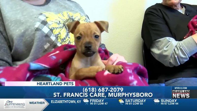 Heartland Pets feat. Popeye and Olive Oyl 2/26