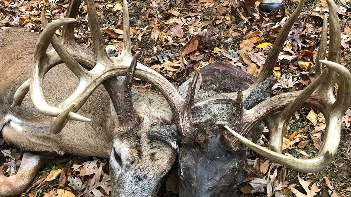 """The Kentucky Department of Fish and Wildlife Resources posted this photo of a """"two-headed"""" deer..."""