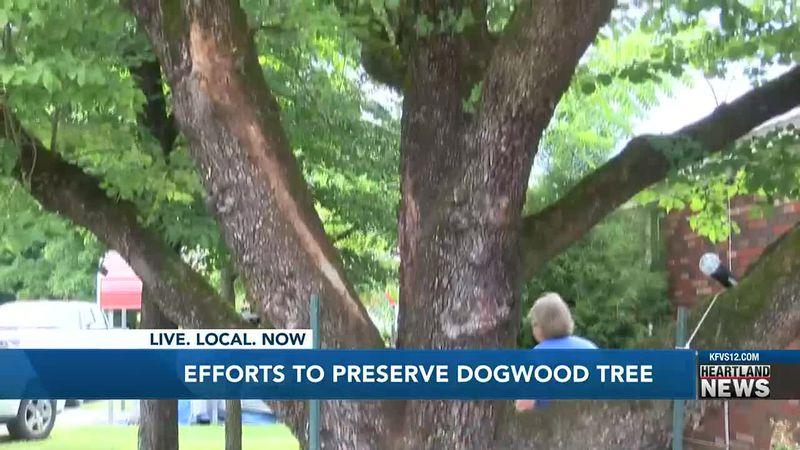 Tree preservation effort in Charleston