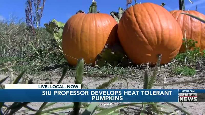 An SIU professor developed a heat-resistant pumpkin.