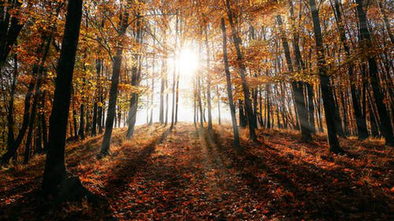 A sunny fall day with highs in the mid to upper 60s.(Source: Pexels/stock image)