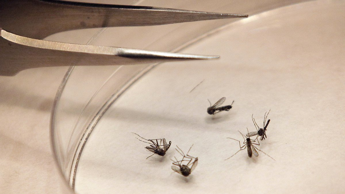 """""""Although we are already into fall, we are expecting a warm weekend and West Nile virus remains..."""