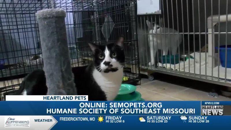 Heartland Pets feat. Humane Society of Southeast Mo. 2/19