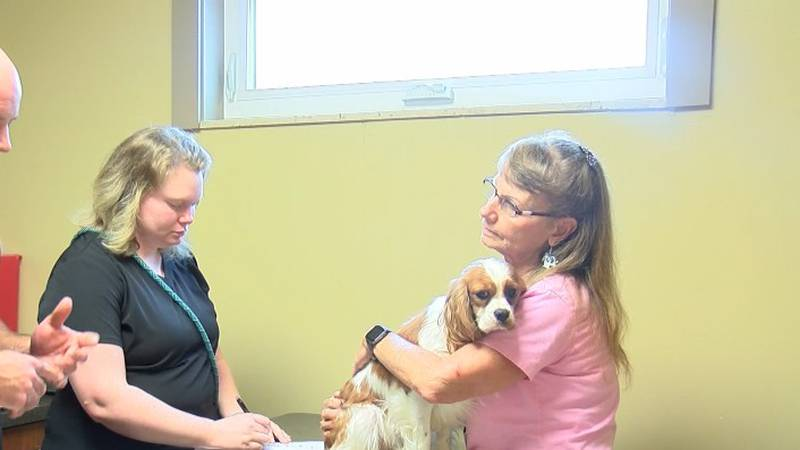 Veterinarians are getting a increasing workload due to pet ownership.