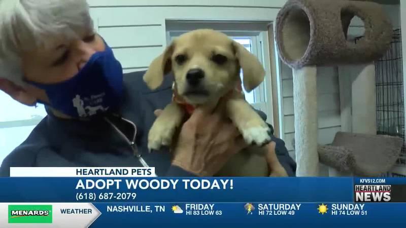 Heartland Pets:  Meet Woody!  4/9