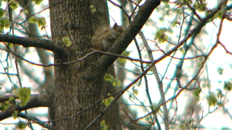Sixteen people were cited for illegal squirrel hunting in and around the Current River...