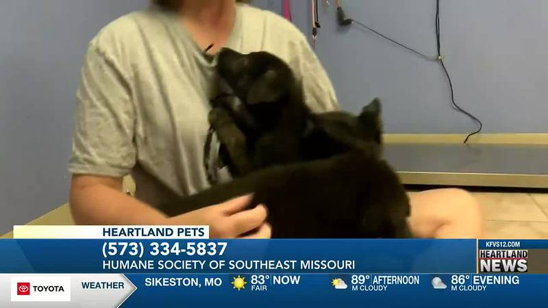 Heartland Pets this week featured three puppies at the Humane Society of Southeast Missouri.