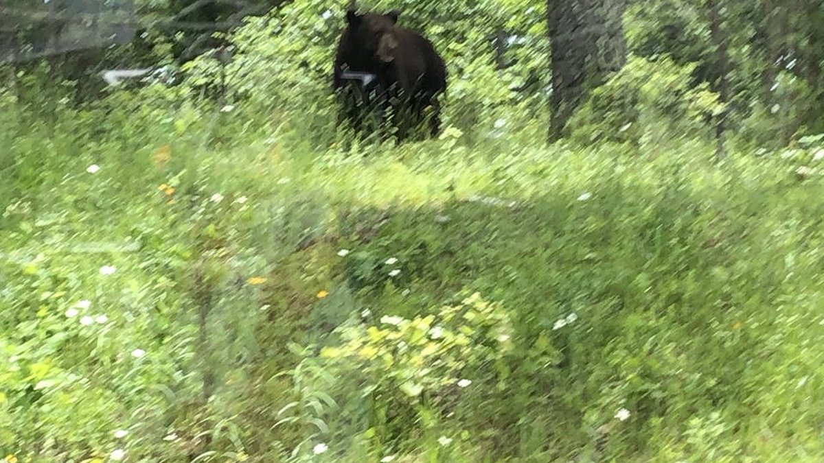 This bear was spotted in Carter County on Thursday. (Source: Marlene Stout)